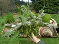 森林粪便特产苔藓