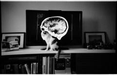 Por Dentro do Cérebro de um Gato / Inside a Cat´s Brain