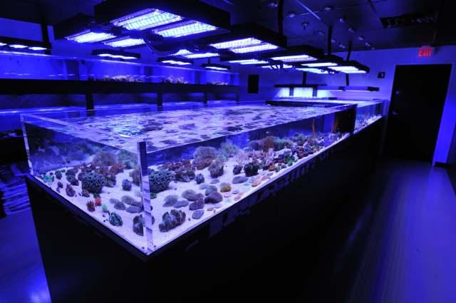 Aquarium supplies near me aquariums for saltwater fish for Fish farm near me