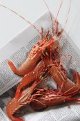 Spot Prawns from Seafood City/Granville Island
