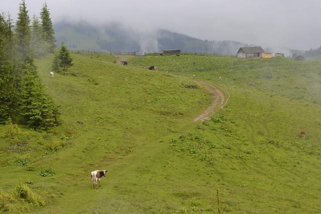 Horseback Riding Trip in the Carpathians _ Roaming through dairy farms