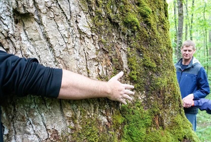 Tree Hugging - Great Smoky Mountains National Park - Sugarlands Distilling Blogger Trip, Gatlinburg, Tenn., May 5 -7, 2017
