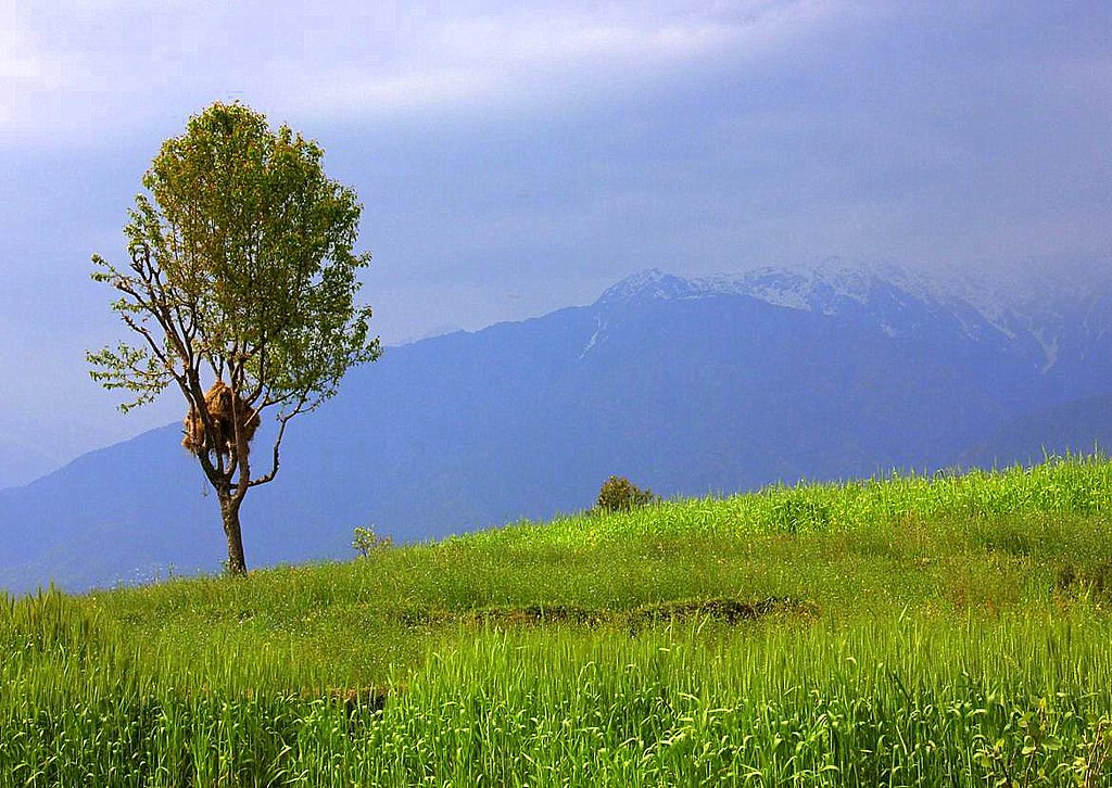 Plan your Dharamkot trip in June for best views and dry season
