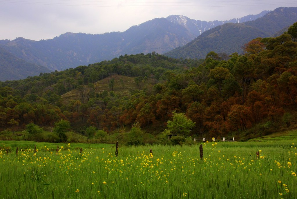 The lush green valleys make great hikes for those looking for beyond paragliding in Bir