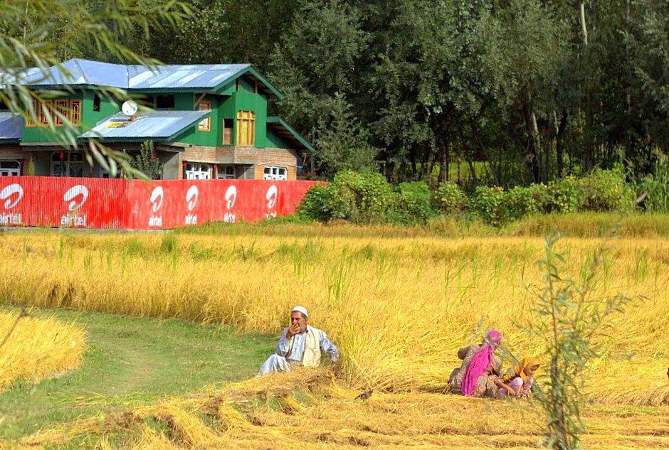 Autumn harvest going on somewhere on the Srinagar Leh road trip