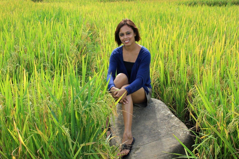 Rice fields of Sa Pa