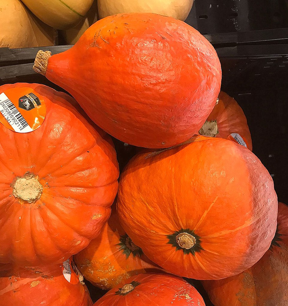 Pumpkin for sale