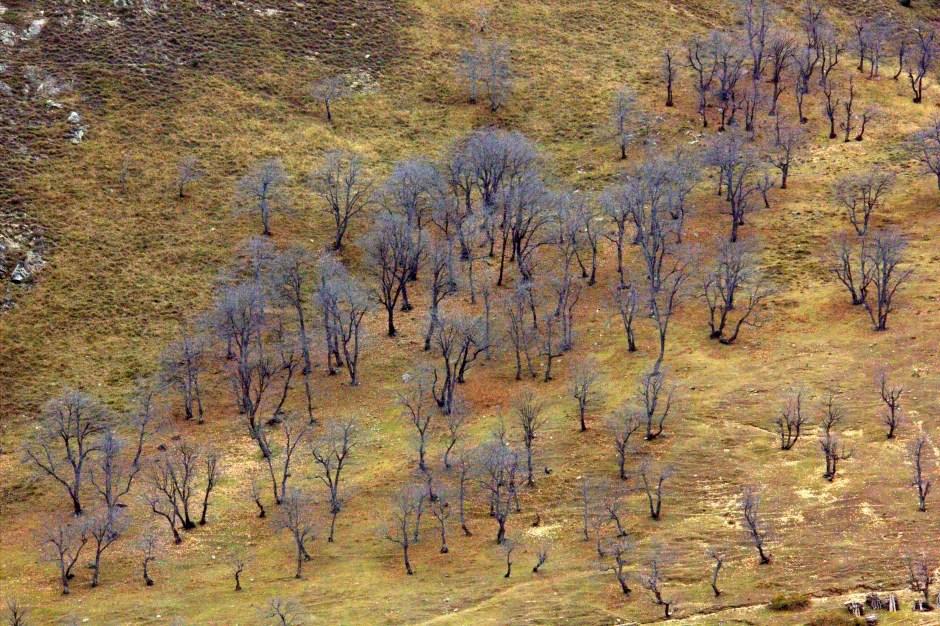 Autumn colours near Gurez