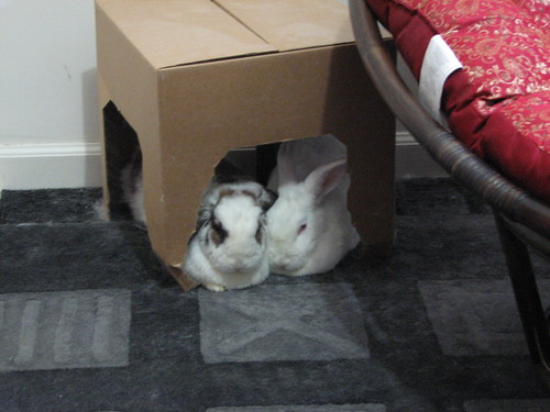 fighting for space under the box
