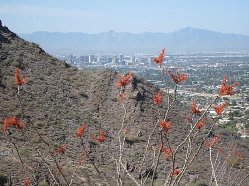 Phoenix in all her glory