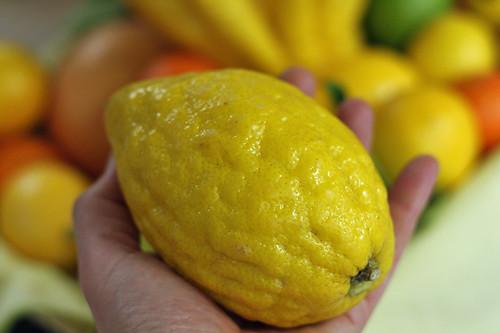 etrog citron