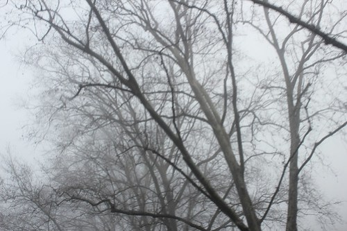 Treetops surrounded by Fog