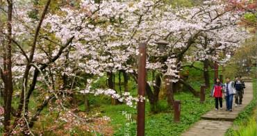 嘉義,阿里山.︱阿里山賞櫻路線III.阿里山工作站-三代木櫻花步道