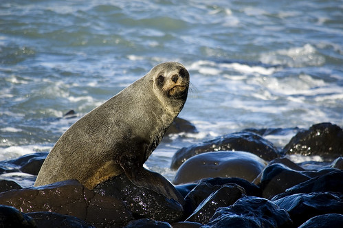 The first of the seals by Steph Jennings
