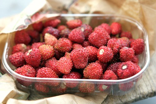 fraises des bois