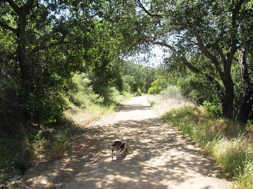 Irvine Regional Park: Horseshoe Loop Hike