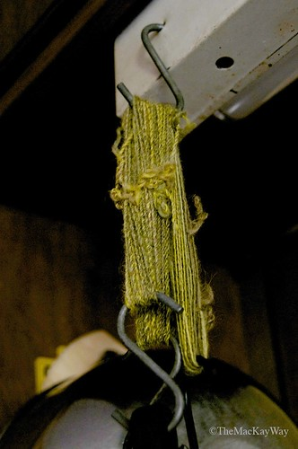 Hanging spun, plied and washed yarn to dry.
