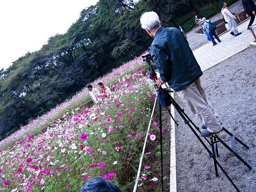Flowers as a hobby