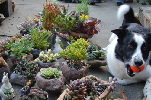 Max and succulent containers.