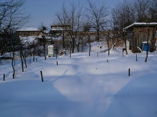 snowfall-garden