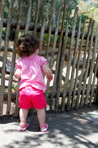 Looking at the zebra DOGGIE!