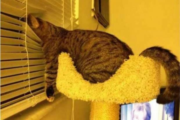 ύπνος γάτες Γάτα