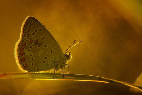 """Butterfly in raking light • <a style=""""font-size:0.8em;"""" href=""""http://www.flickr.com/photos/22289452@N07/9421459466/"""" target=""""_blank"""">View on Flickr</a>"""