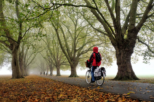 Cycling in the fog