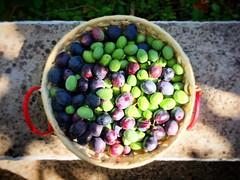 ¿Unas olivas? #unasolivitas #jaen #cazorla