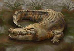 Crocodile Study