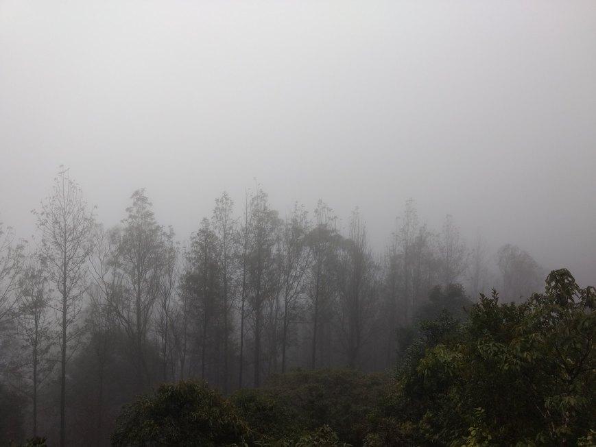 foggy mist photo trees chikmagalur