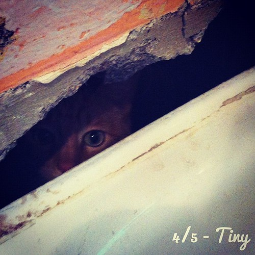 Didn't think our #tiny orange cat could squeeze through this tiny hole. I was so wrong.#photoadayapril