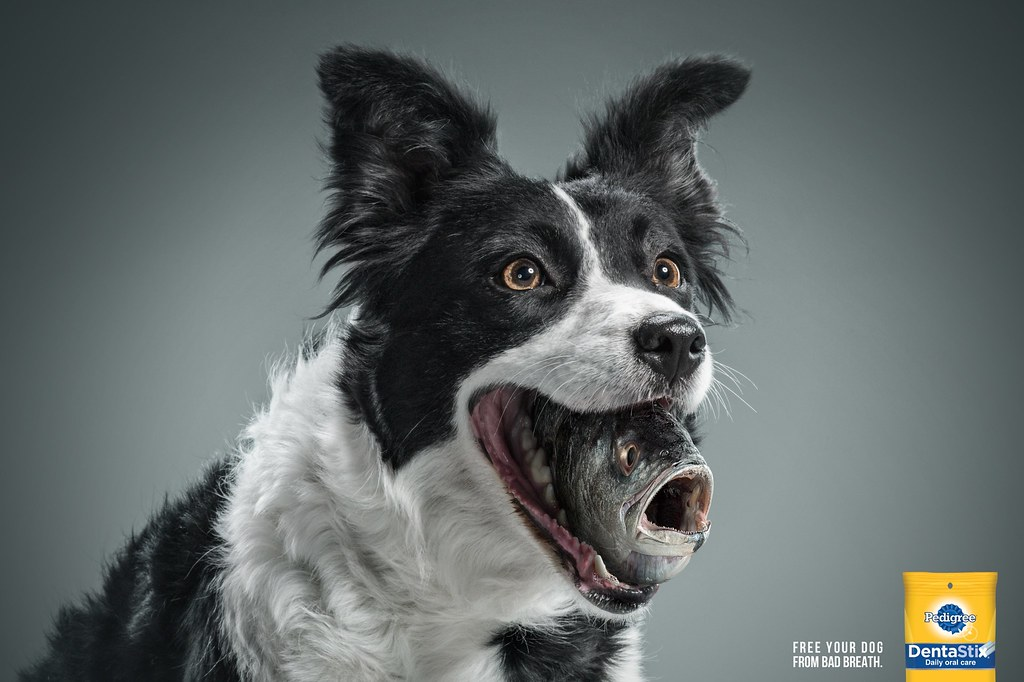 Pedigree - Fish Breath Dog