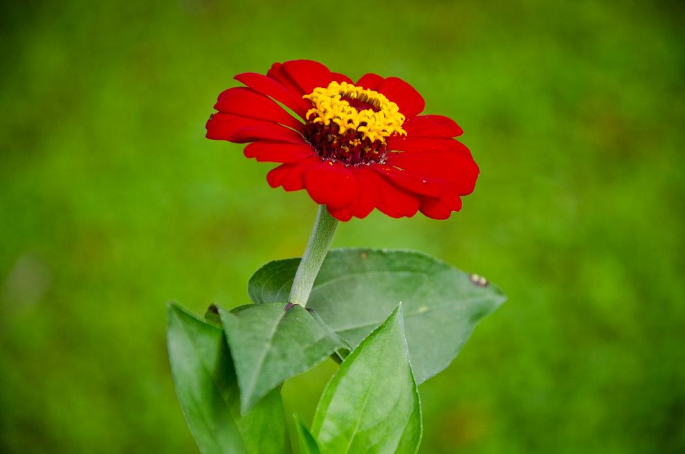 Una flor silvestre crece en el campo camino a Humaitá, los humedales del departamento de Ñeembucú favorecen el crecimiento de mucha variedad de plantas. (Elton Núñez)