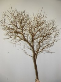 manzanita branches wholesale