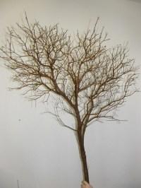 manzanita branches wholesale
