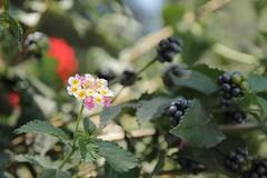Tsilivi flora