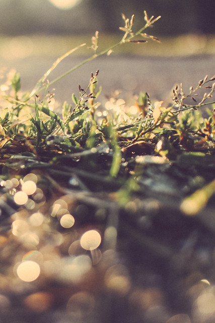 8/1/13 - Driveway Grass