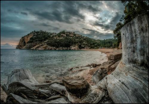 Giverola (Tossa de Mar)