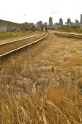 Tracks in summer