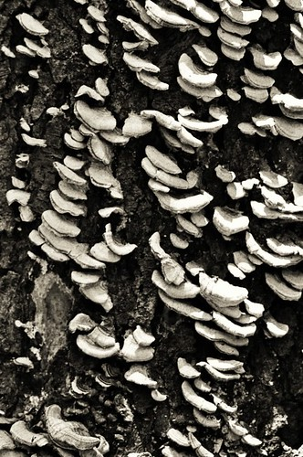 Tree Shrooms