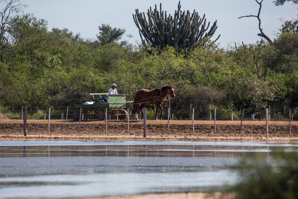 Los carritos o sulkis son transportes tipicos de la zona y evidencian la presencia menonita del chaco. (Tetsu Espósito)