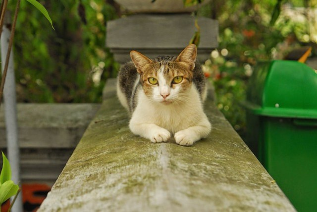 The cat at the temple