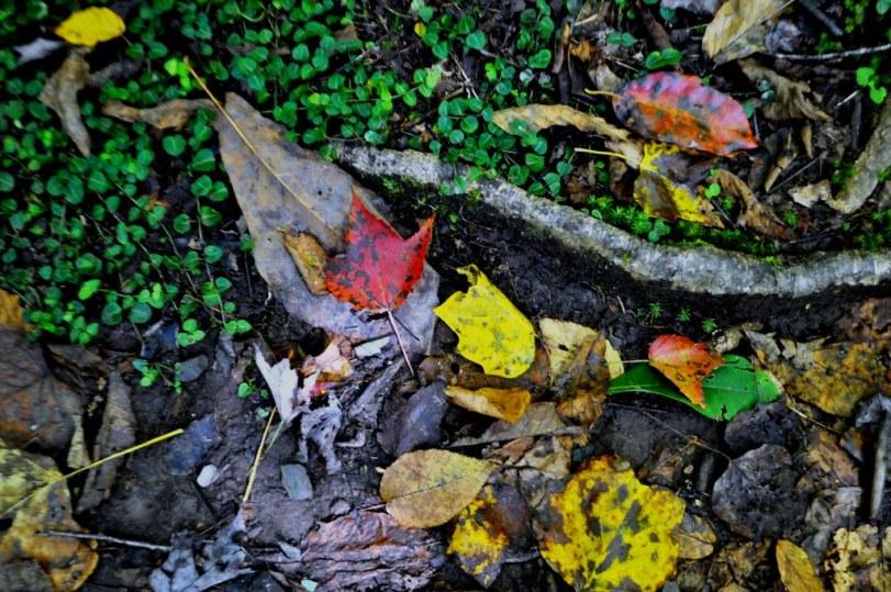 Hint of Fall in Joyce Kilmer Memorial Forest, North Carolina, Oct. 9, 2014