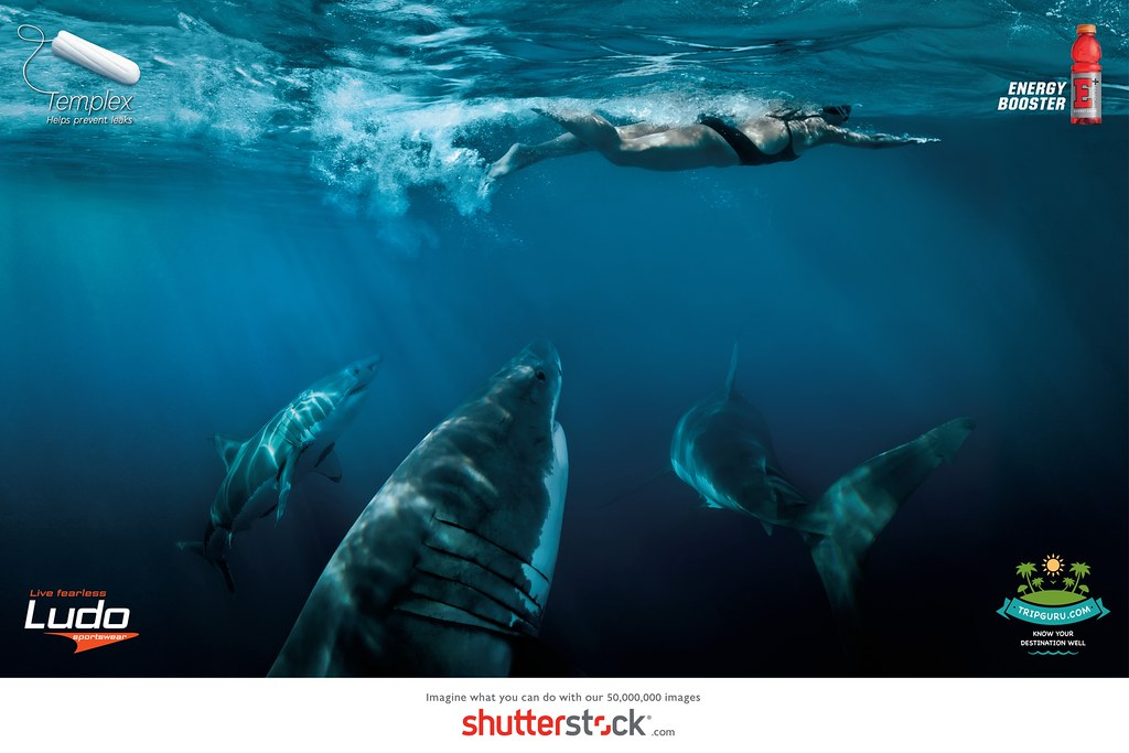 Shutterstock - Imagine Sharks