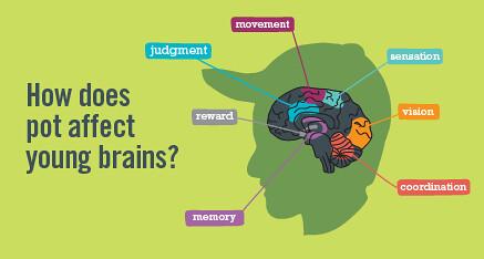 marijuana on teen brain