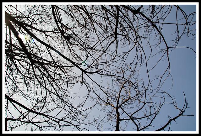 Damu Nagar - branches