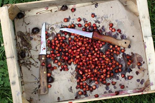 cherry-jam-pits