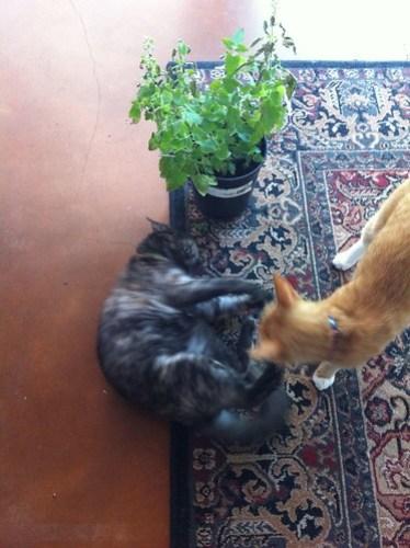 Feline Friday: Drug wars part 3