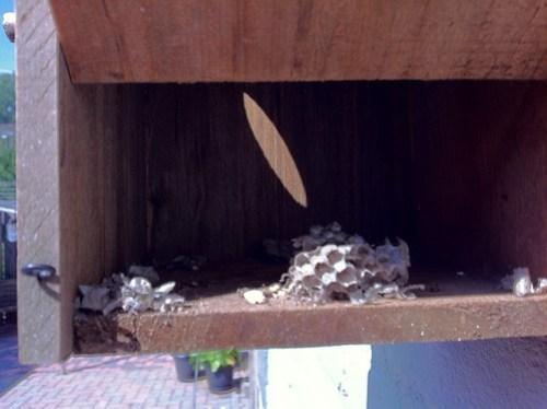 Aparte invulling van een vogelhuisje... #Wespennest